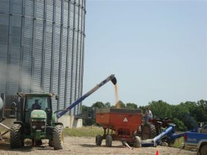 filling grain wagons from the damaged bin thanks to augers