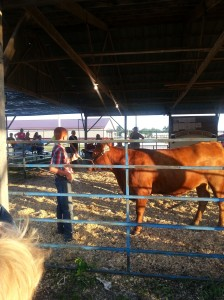 Conner showing his Red Angus Heifer at the county fair.  He likes having his cow match his hair!