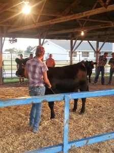 Rachelle showing her Black Angus Heifer at the county fair.