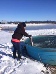 Our daughter is checking the cattle water tanks on the farm.  She's found a frozen one and is busting the ice.